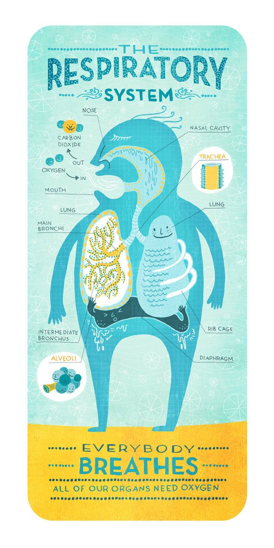 Data visualization & Infographics : The Respiratory System by Rachel Ignotofsky. $23.00, via Etsy.
